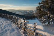 Ein zugeschneiter Zaun ist neben einem Baum zu sehen.