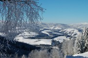 Winterliche Landschaft mit vereistem Baum im Vordergrund.